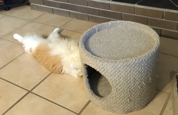 strange place to sleep