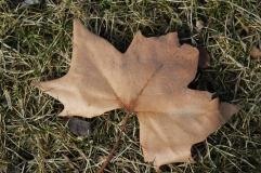 Cee's fun foto challenge - leaves