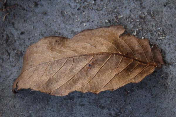 Cee's photo fun challenge - leaves