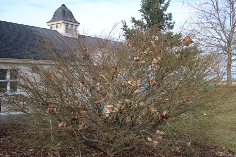 Cee's fun foto challenge - trees, leaves